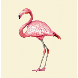 Coupon Flamant Rose 45x45 cm