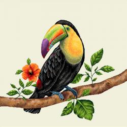 Coupon Toucan