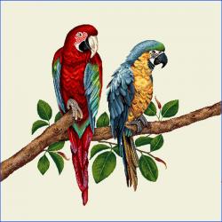 Coupon Perroquet 45x45 cm
